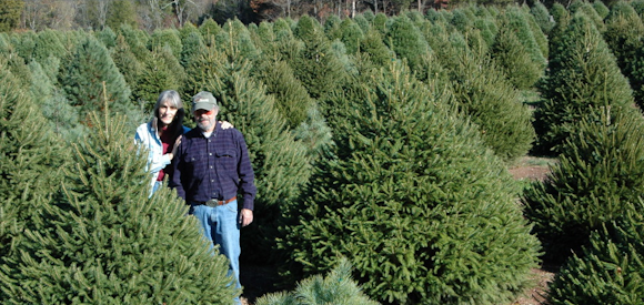 Wolgast Christms Tree Farm in Somerset, NJ