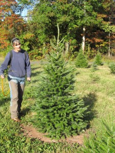 To help keep bucks from rubbing our Christmas trees we spray each individual tree with a deer repellant.  It's very labor intensive, but seems to work pretty well - until it rains and gets washed off.  Then we have start all over again.